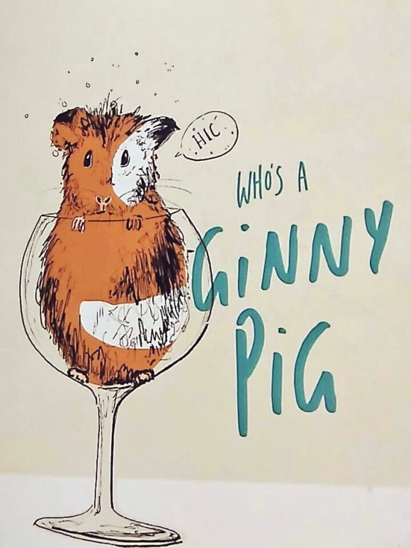 The front of a greetings card with a guinea pig saying 'hic' as if drunk peering over the top of a glass. Next to that the text reads 'who's a ginny pig?'